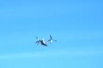 osprey-nov-9-2011